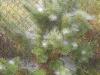 naravoslovni-dan-gozd-003