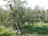 naravoslovni-dan-gozd-047