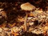 naravoslovni-dan-gozd-054